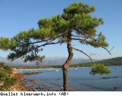 Bild Nuet-Welt-Mekong-J.jpg
